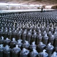 Способ расположения грибных блоков в помещении для выращивания вешенки.